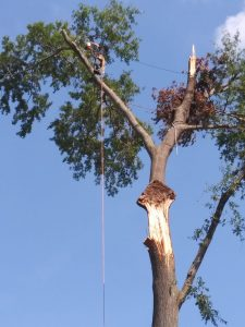 Tree Services Header